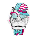 Cool hippo wearing a cap and sunglasses. vector illustration