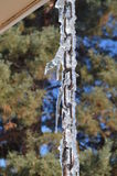 Cool icicles on a drip chain. Unique and unusual icicles on a drip chain. What animal do you see here stock image