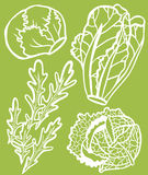 Cool Lettuce Selection Set Stock Images