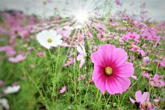 Filed on flowers stock photography