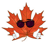 Cool mapple leaf cartoon Royalty Free Stock Images