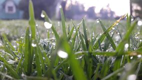 Cool morning grass with dew royalty free stock photo