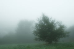 Cool myst tree in the morning english fog Stock Images