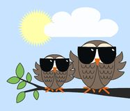 Cool owls Royalty Free Stock Photo