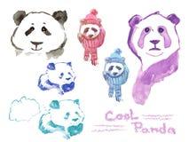 Cool panda - Set of watercolor pandas Stock Image