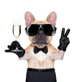 Cool party dog. French bulldog holding a glass of champagne with peace or victory fingers , ready to toast, isolated on white background stock photography