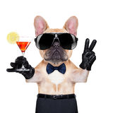 Cool party dog Stock Photos