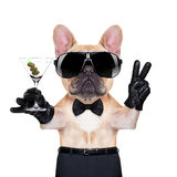 Cool party dog Stock Images