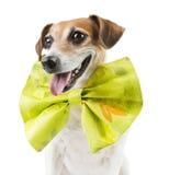Cool pet celebration Stock Images