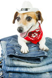 Cool pet jeans Royalty Free Stock Photo