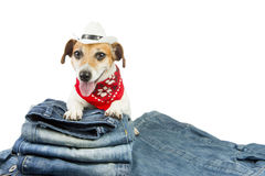 Cool pet jeans Stock Photo