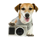 Cool pet photographer royalty free stock photography