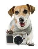 Cool pet photographer Stock Images