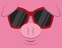 Cool Pig Sunglasses. Cartoon pig head with sunglasses Stock Images