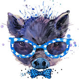Cool Pig T-shirt graphics, pig illustration with splash watercolor textured background. Royalty Free Stock Photography