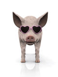 Cool piglet wearing sunglasses. Royalty Free Stock Images