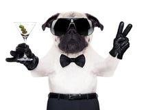 Cool psiego pokój Obrazy Royalty Free