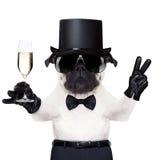 Cool psiego pokój Obraz Royalty Free