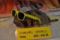 Cool Puffer Fish Stock Image