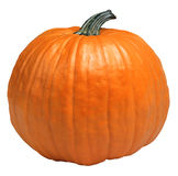 Cool pumpkin Stock Photography