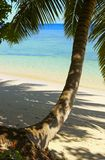Cool shadow of the palmtree. On the island Gan in Indian Ocean, Maldives Royalty Free Stock Images