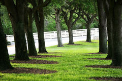 Cool shady area under tree Royalty Free Stock Photos