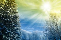 Cool sky on the snowy park royalty free stock images