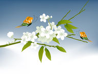 Cool Spring 01. Spring Illustration, Vector file easy to edit or change color Stock Photography