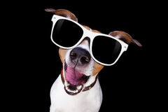 Cool sunglasses dog royalty free stock photos