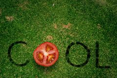 Cool tomato Royalty Free Stock Image