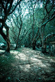 Cool Tone Trees Stock Photography