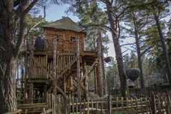 A cool treehouse in a forrest royalty free stock photos