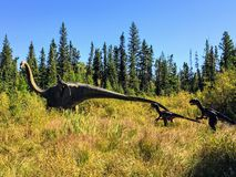 A cool view of a life like, real sized dinosaur display in the forests of Northern Alberta outside of Edmonton royalty free stock images