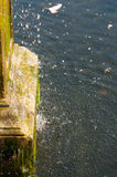 Cool water flowing from an old antique fountain Royalty Free Stock Image