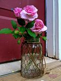 Trio of Pink `Lavender Simplicity` Roses in a Chicken-Wire Covered Jar. Cool water to keep 3 pink `Lavender Simplicity` roses fresh just out of my rose garden Stock Images