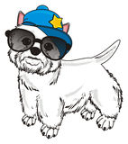 Cool white dog Stock Images