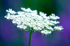 Cool white flower Stock Photo