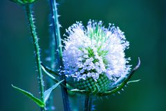 Cool white flower Royalty Free Stock Image