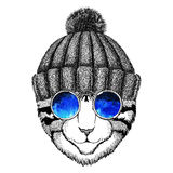 Cool wild cat Fashionable animal Hipster style Vintage illustration Image for tattoo, logo, emblem, badge design Royalty Free Stock Photo