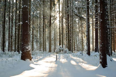 Cool winter day Royalty Free Stock Photos