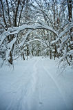 Snowy forest road Royalty Free Stock Images