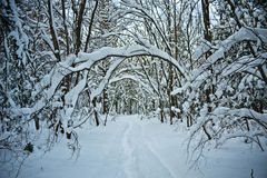 Snowy forest road Stock Photos
