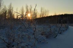 Cool zamarzniętego zima las w ranku przy wschodem słońca Obraz Royalty Free