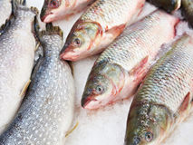 Cooled fish grass carp and pike on store Stock Images