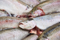 Cooled fish trout on store Royalty Free Stock Photo