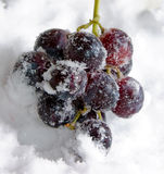 Cooled grapes Royalty Free Stock Photography