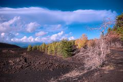 Cooled lava field and autumnal mixed forest in Etna Park royalty free stock images