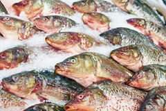 Cooled purified fish carp on store Royalty Free Stock Photo
