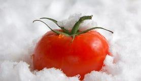 Cooled tomato Royalty Free Stock Photo