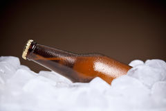 The cooler beer Stock Images